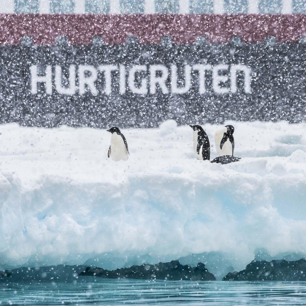 weihnachten in der antarktis a hurtigruten de. Black Bedroom Furniture Sets. Home Design Ideas