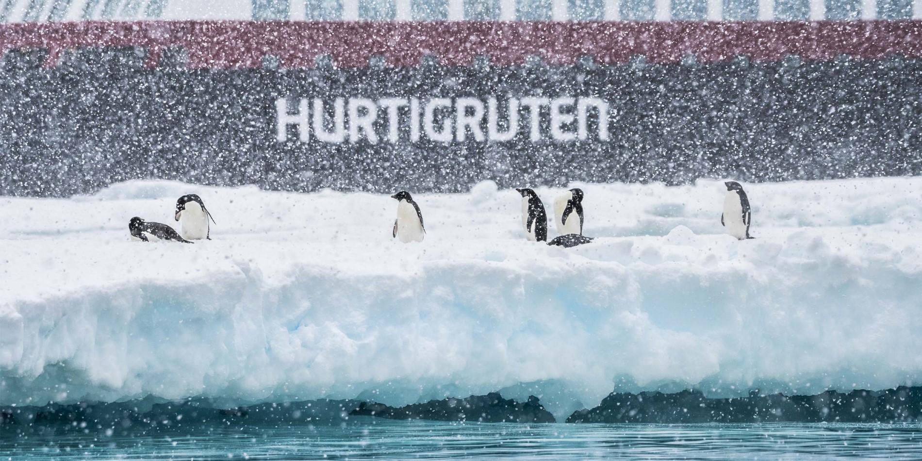 Weihnachten in der Antarktis A   Hurtigruten