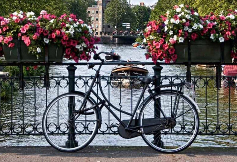 A bicycle parked on the side of a flower