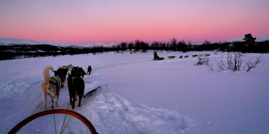 5b_dog_sledding_00_2811_original.jpg